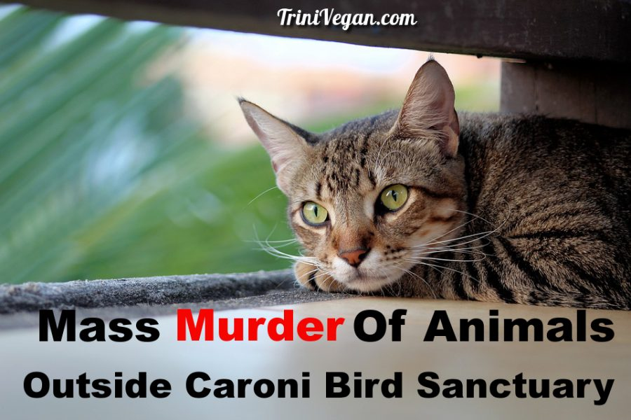 Mass Murder Of Animals Outside Caroni Bird Sanctuary