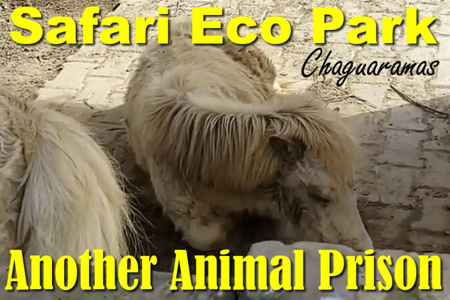Safari Eco Park Chaguaramas: Another Animal Prison